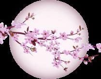 Lekcje kultury i podstaw języka japońskiego